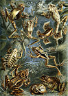 Ernst Haeckel Art Forms in Nature New Repro Print/Poster #10 Giclee Archival Ink