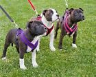 Trixie Fleece Lined Padded Dog / Puppy Harness Large Various Colours