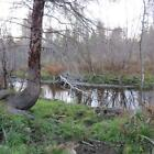 78 ACRES OF LAND+1900 FEET OF WATERFRONT ON THIBODEAU BROOK: FISH FROM OWN LAND