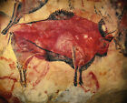 Cave Painting of a Bison From the Altamira Cave Wall Art Poster Print 15,000 BCE