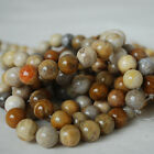 Grade A Natural Fossilized Coral (gold) Gemstone Round Beads 4, 6, 8, 10mm Size