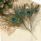 10/50/100pcs Peacock Feathers Tail Natural DIY Long For Bouquet DIY Decoration