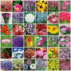 VARIETIES Perennial  Annual Flower Seeds Heirloom NON-GMO Top Quality 181-240