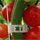 30/50/100Pcs Trellis Supports Connects Vines Cages Plants Tomato Clips Popular