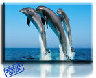 Wall Art Canvas Picture Print of Three Dolphins  Framed  Ready to Hang