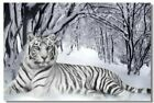 Poster Silk White Tiger Roome  Art Wall Cloth Print 212