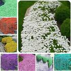 100pcs Rock Cress Seeds Garden Creeping Thyme Perennial Flower Plant EN24H