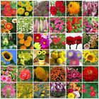 VARIETIES flower Seeds Colorful retail package with English name plant picture