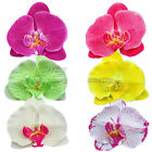 New Orchid Flower Hair Clip Bridal Hawaii Party Girl