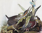 "Green Heron-by John James Audubon -20""x26"" Art on Canvas"