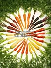 PHOTO CARROT VEGETABLE FOOD CIRCLE ROOT POSTER ART PRINT PICTURE