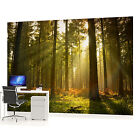 WALL MURAL PHOTO WALLPAPER (576VEVE) Forest Wood Landscape Trees
