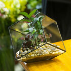 Inclined Cube Clear Glass Geometric Terrarium Box Tabletop Succulent Plant Fern