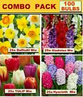 GLADIOLI  BULBS-  COMBO  PACKS- BULK  LISTING