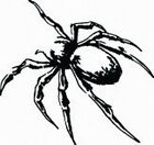 SPIDER  #4  OUTLINE DECAL VINYL GRAPHIC CAR TRUCK  SUV VAN  VEHICLE CREEPY WINDO
