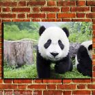 BABY PANDA WILDLIFE COOL CANVAS WALL ART BOX PRINT PICTURE SMALL/MEDIUM/LARGE