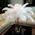 x10 Premium Sterilized High Quality Natural Ostrich Feathers Wedding Party White