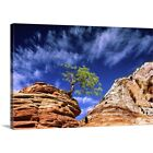 Premium Thick-Wrap Canvas Wall Art entitled Dwarf pine on...