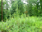 NO RESERVE!!! NORTHERN ARKANSAS, UNRESTRICTED, WOODED LOT, NEAR LAKES!!