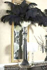 "x10 Premium Steilized Natural Black Ostrich Feathers (Choice of Size, 6 to 13"")"