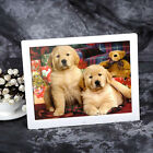New 15 inch HD  LED Digital Photo Picture Frame MP3 MP4 Movie+Remote Control SM
