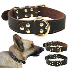 Heavy Duty Leather Large Dog Collars Authentic Plain Dog Collar Neck Buckle S-L