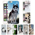 Funny Pet Dog Siberian Husky Animal Phone Case Cover For iPhone 4/5/SE/6s/6 Plus