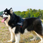 husky dog harness