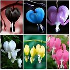 200PC Perennial Herbs Dicentra Spectabilis Flower Plant Bleeding Heart Seeds Hot