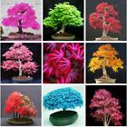 20 Pcs 7 Styles Rare Japanese Maple Sementes indoor Bonsai Tree Seeds