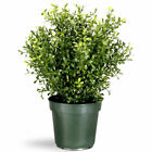 National Tree Company Argentia Plant with Green Pot