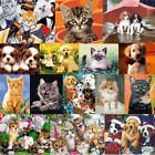 40 50CM DIY Acrylic Paint By Number Kit Oil Painting Wall Decor On Canvas CATS