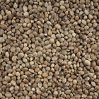 Hemp Seed Bird Parrot Food - Industrial Hemp