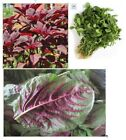 Amaranth, Edible Tender (Chinese Spinach)  Fresh Hand-packaged Flower Seeds