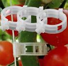 200 Garden Plant Support Clips Trellis for Vine Vegetable Tomato to Grow Upright