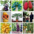 20 pcs/Bag Real Dwarf Papaya Organic Heirloom Vegetable Fruit Tree Seeds Juicy B