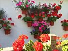 """Hang plants in 6"""" pots on a TRELLIS or Pallet.Plant pot rings,holders,hangers"""