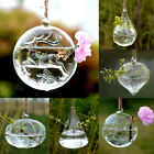 Hanging Glass Hydroponic Flowers Vase Hanging Globe Ball  Air Plant Terrarium