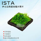 Aquarium ceramic Water Plant Cultivation Nature Aquarium Aquascape Aquatic Moss