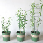 45/ 60cm Garden Plant Climbing Plants Conical Trellis Supporter Support Frame US