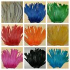 Nimrod's Tackle 50 ROOSTER TAIL FEATHERS FLY TYING MATERIAL (8 to 10