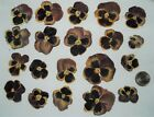 20 Pressed Dried Pansy Flowers