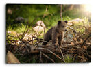Baby Bear In The Forest Cute Canvas Wall Art Picture Home Decoration