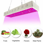 CASTNOO 3000W LED Grow Light Full Spectrum Indoor Hydro Veg Flower Growing IR