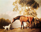 BAY HORSE AND WHITE DOG FRIENDS ANIMAL PAINTING BY GEORGE STUBBS REPRO