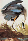 "Great Blue Heron -by John James Audubon -20""x26"" Art on Canvas"