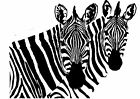 Zebras , Pair of  African Zebra vinyl wall art decal