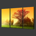 SUNRISE IN FOREST PREMIUM SET OF THREE CANVAS PRINT PICTURE WALL ART FREE UK P&P