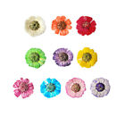 DF012 10 Pcs, 100 Pcs Nail Art 17 x 17mm Mini Dried Flower Set-Common Daisy