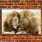 LIONS WILDLIFE AFRICA COOL CANVAS WALL ART BOX PRINT PICTURE SMALL/MEDIUM/LARGE